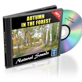 Autumn in the Forest – Sounds of the Woods