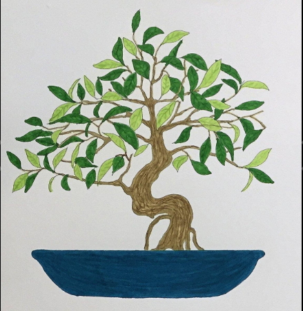 bonsai coloring page