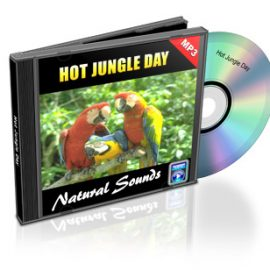 Hot Jungle Day: Sounds of Nature
