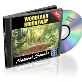 Woodland Bridalway – Relaxing Sounds of the Forest