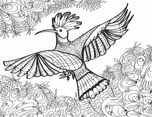 Hoopoe bird coloring page for adults hummingbird adult coloring book