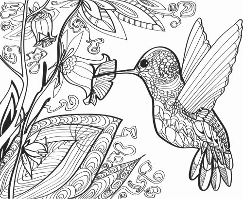 Hummingbird Adult Coloring Book